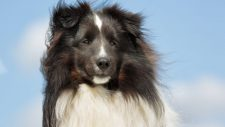 Why You Need a Sheepdog in Your Business